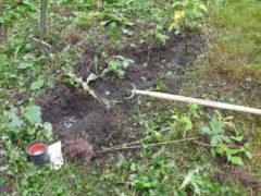 Himbeeren-pflanzen-mit-Hacke-Duenger-und-Grabgabel