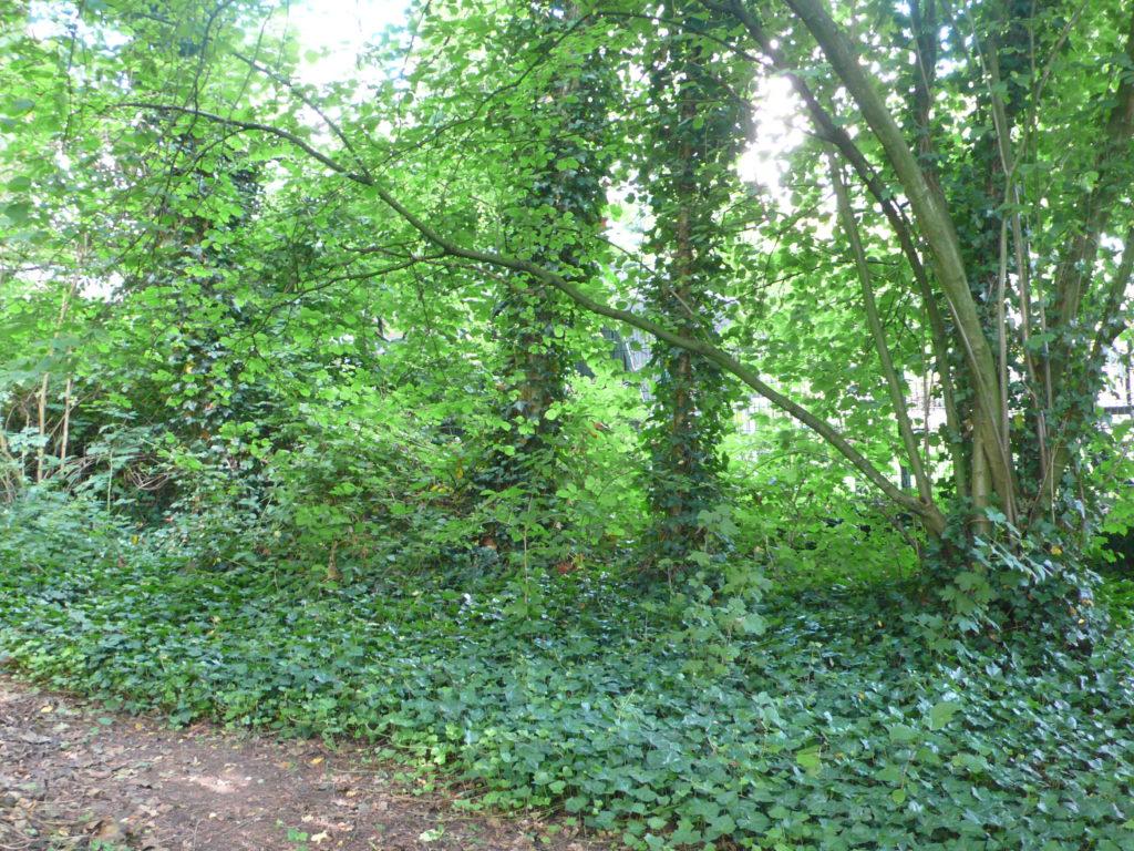 Laubwald im Garten