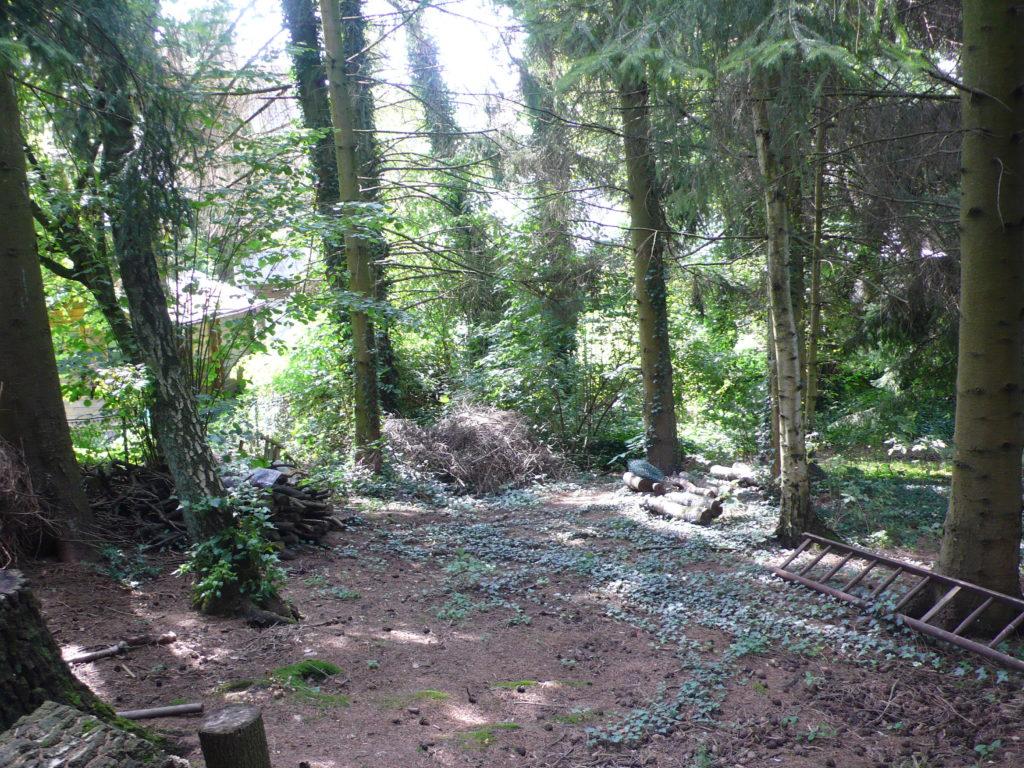 Nadelwald im Garten