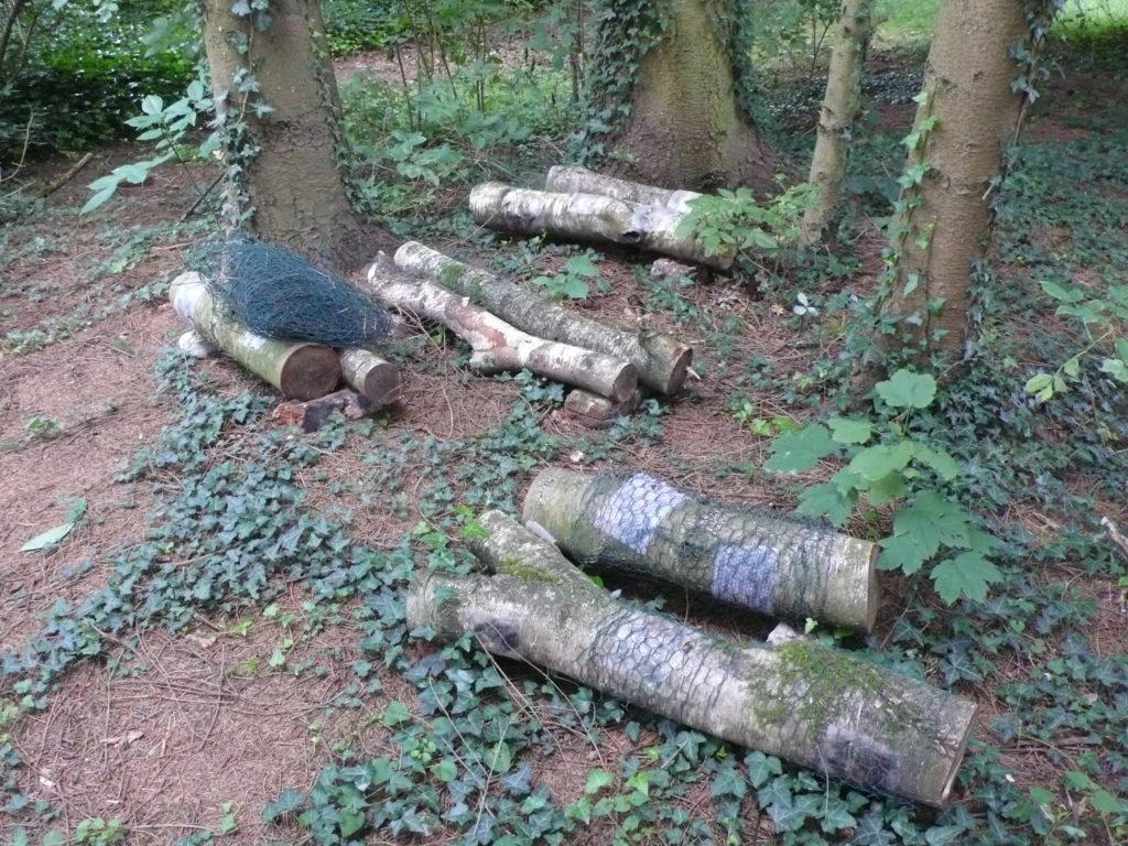 Pilzgarten im Wald