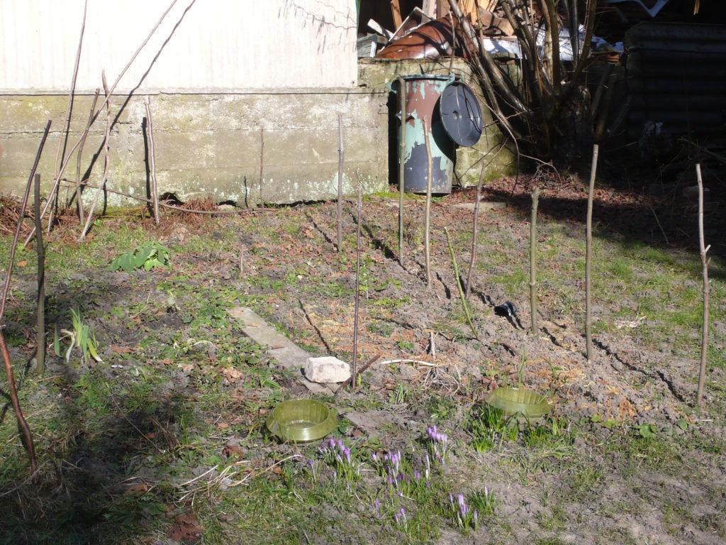 Das sonnigste Beet im Frühjahr ist das Waldgartenbeet