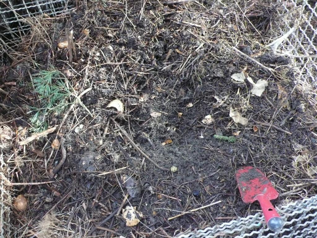 In der Mitte sieht man reifen Kompost unter der oberen Schicht