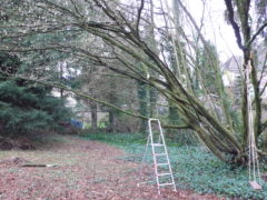 Haselnussholz eignet sich als Kaminholz