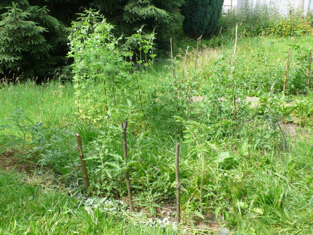 Gemüsebeete in der Wiese