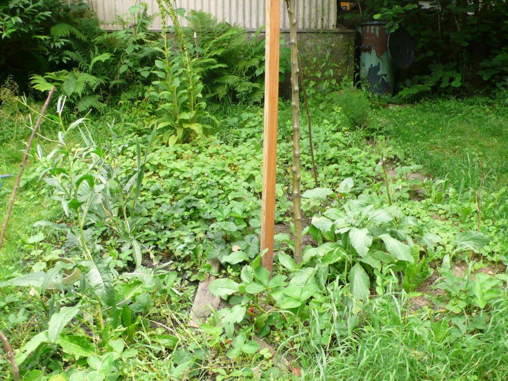 Waldgartenbeet im Juni