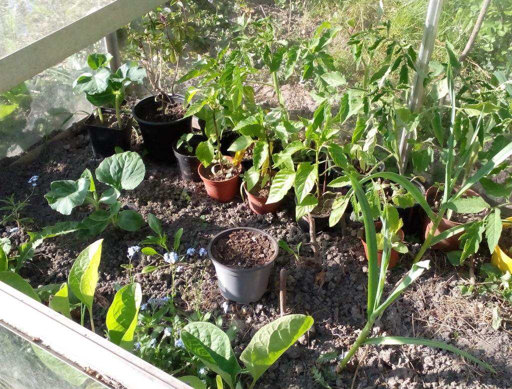 Linke Seite - Paprika, Tomaten, Auberginen, Mangold und Schlangenzucchini Serpente di Sicilia