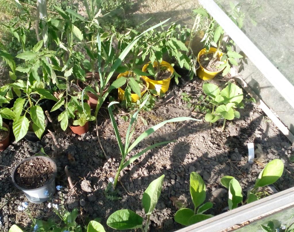 Rechte Seite - Tomaten, Knoblauch, Auberginen und Cocomeri oder Gurkenmelone