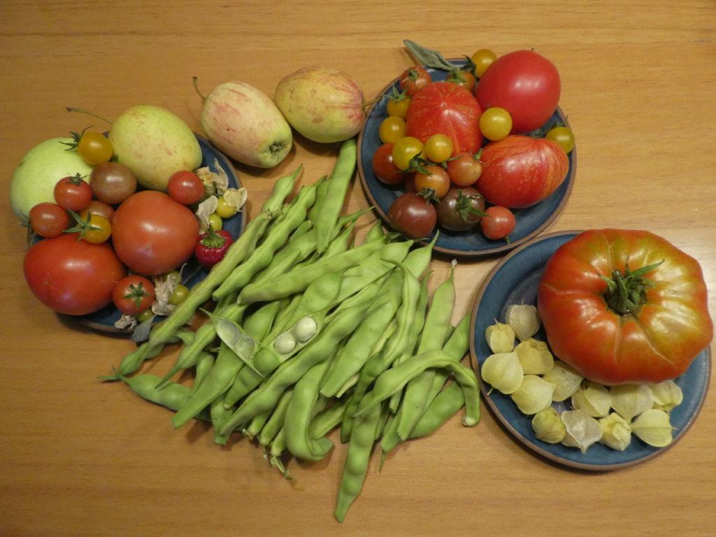Geerntete Tomaten, Äpfel, Trockenbohnen und Ananaskirschen