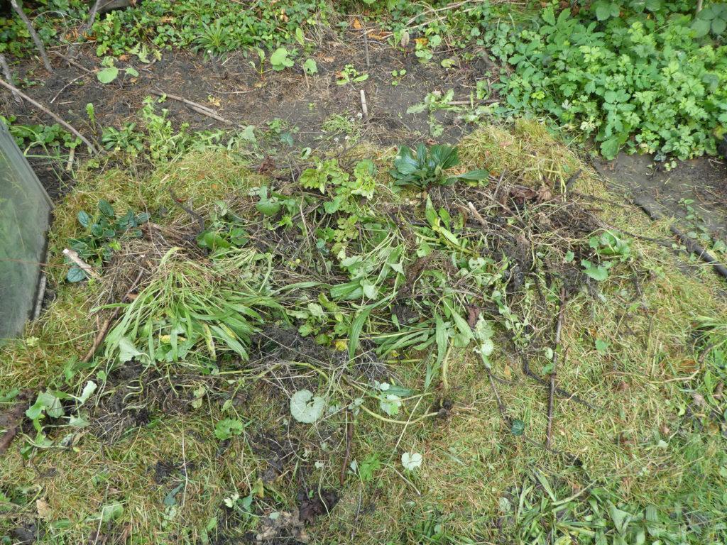 Nachdem die Kartoffeln Anfang Oktober ausgegraben waren, wurde der restliche Mulch, Unkraut und eine Schicht Rasenschnitt drauf gepackt